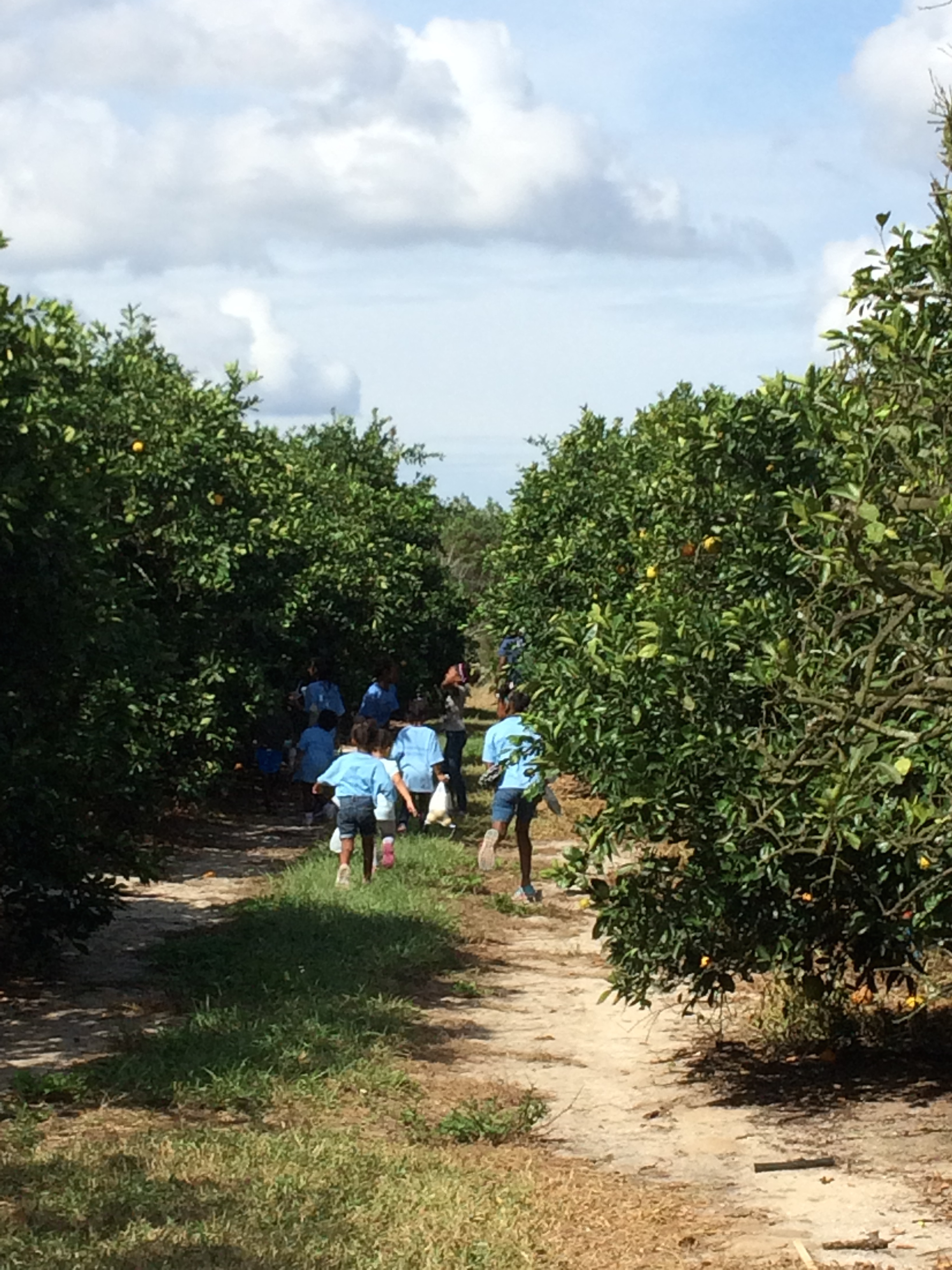 THE GIRLS ALL TOOK OFF IN EXCITEMENT, LOOKING FOR ORANGES IN THE GROVE. THIS EXCITEMENT WAS QUICKLY TEMPERED BY THE HEAT
