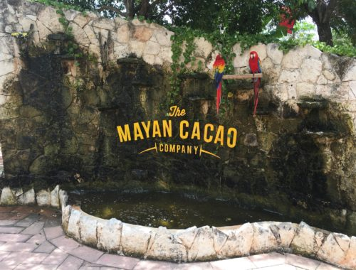 mayan cacao entrance