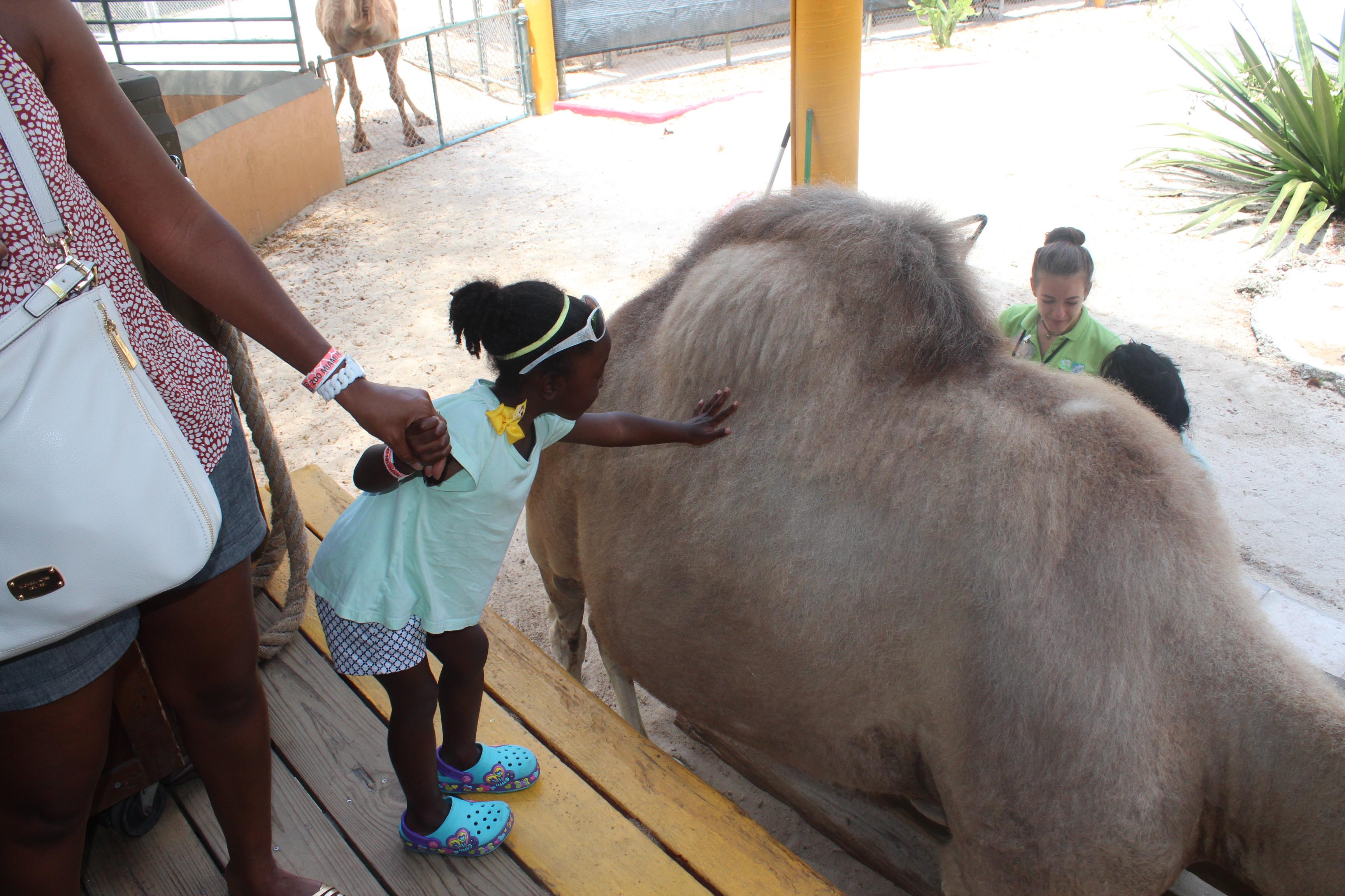 camel-jasmine-petting