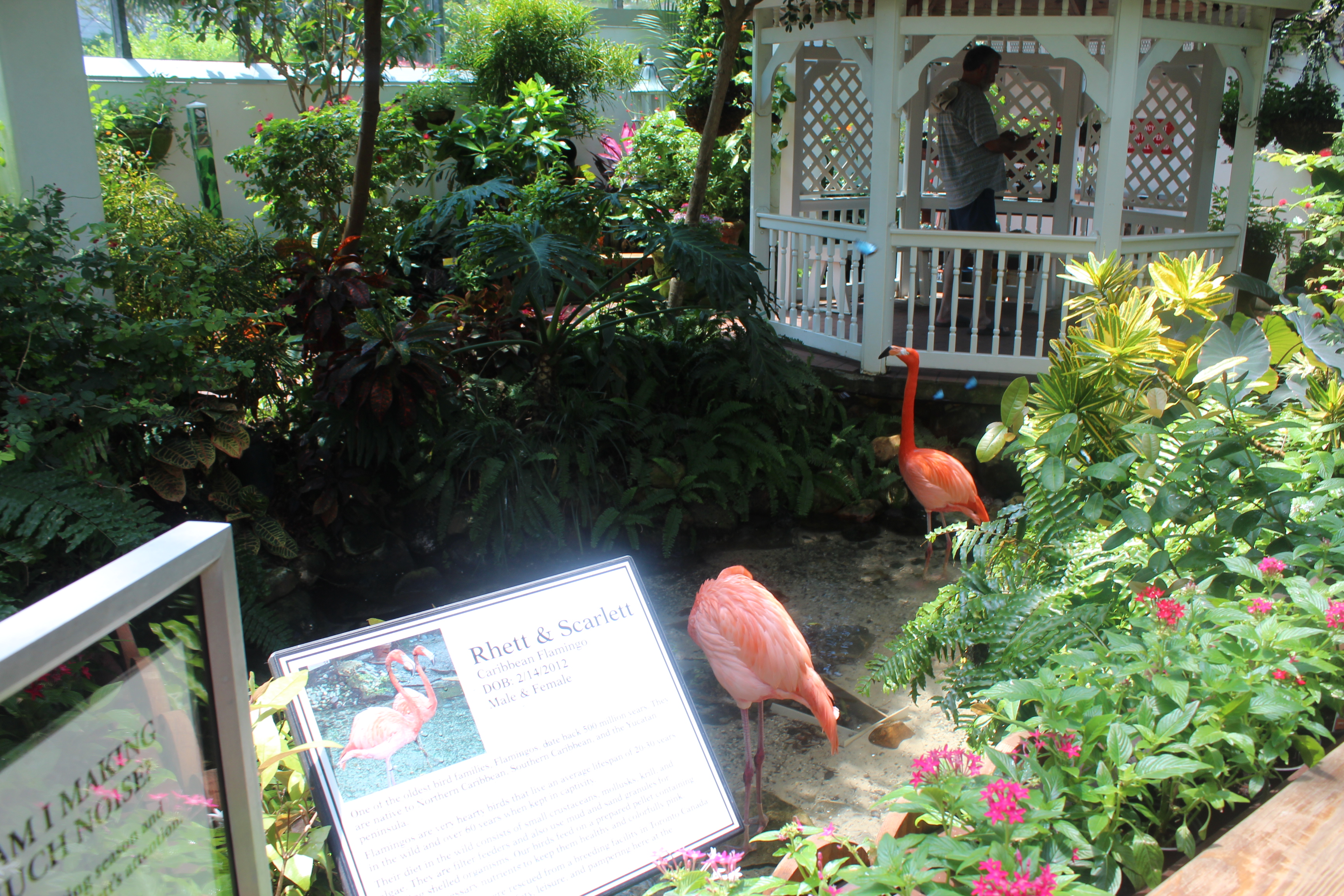 kw-butterfly-flamingos