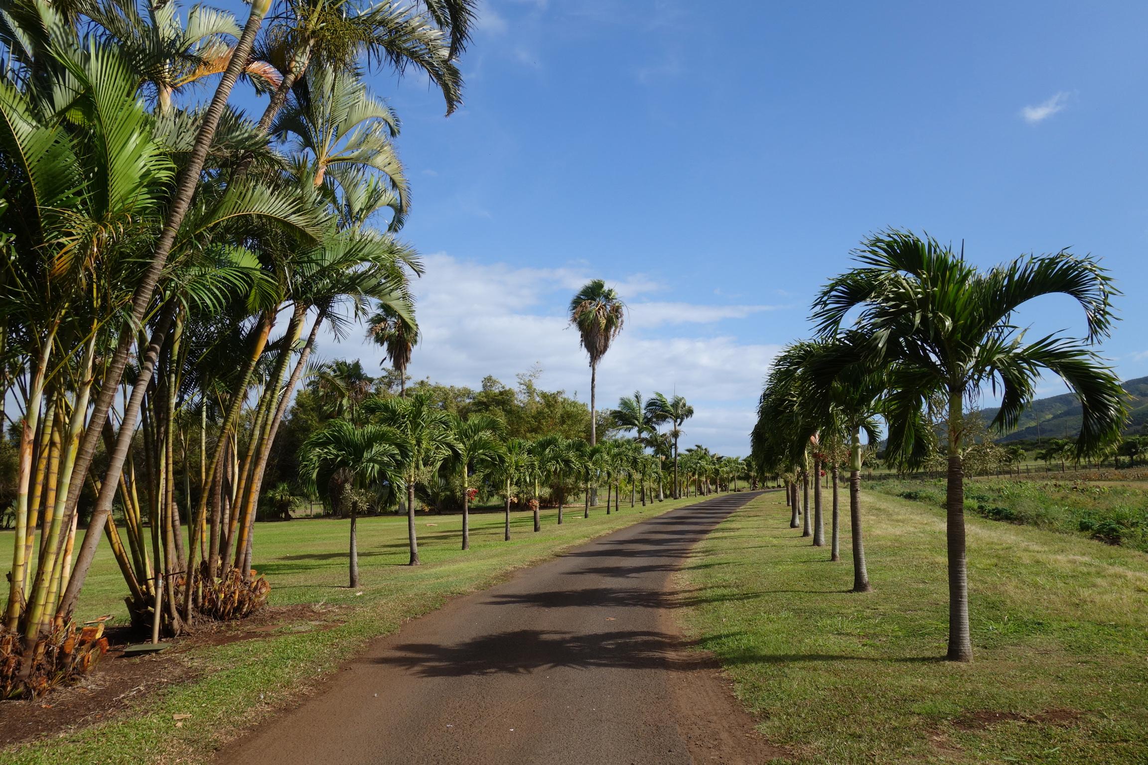 maui tropical plantation hawaii