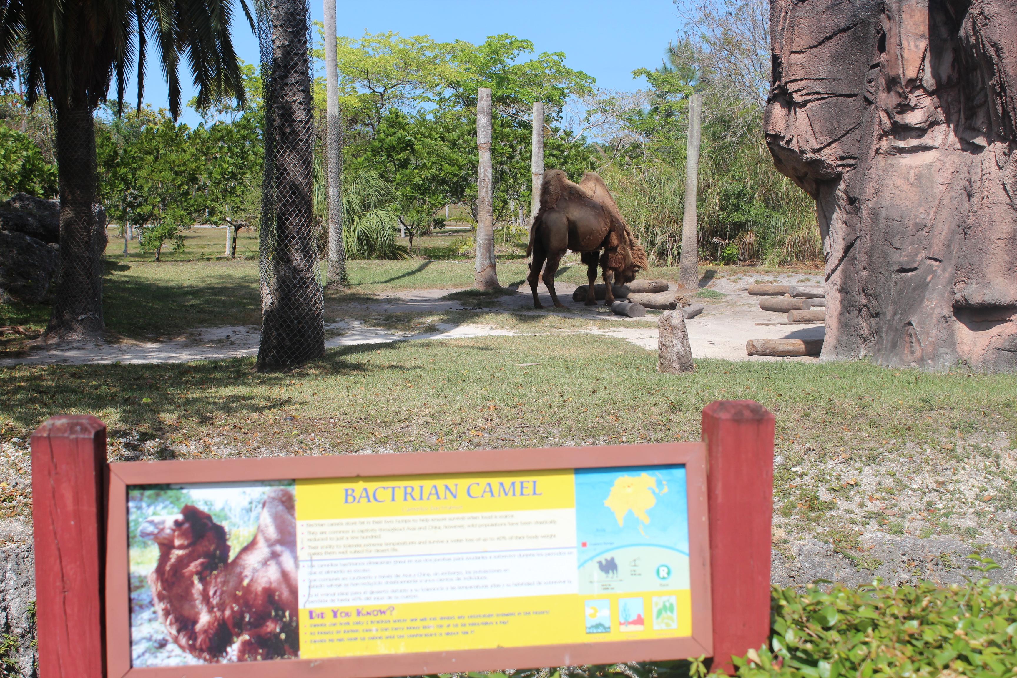 bactrian-camel-signage