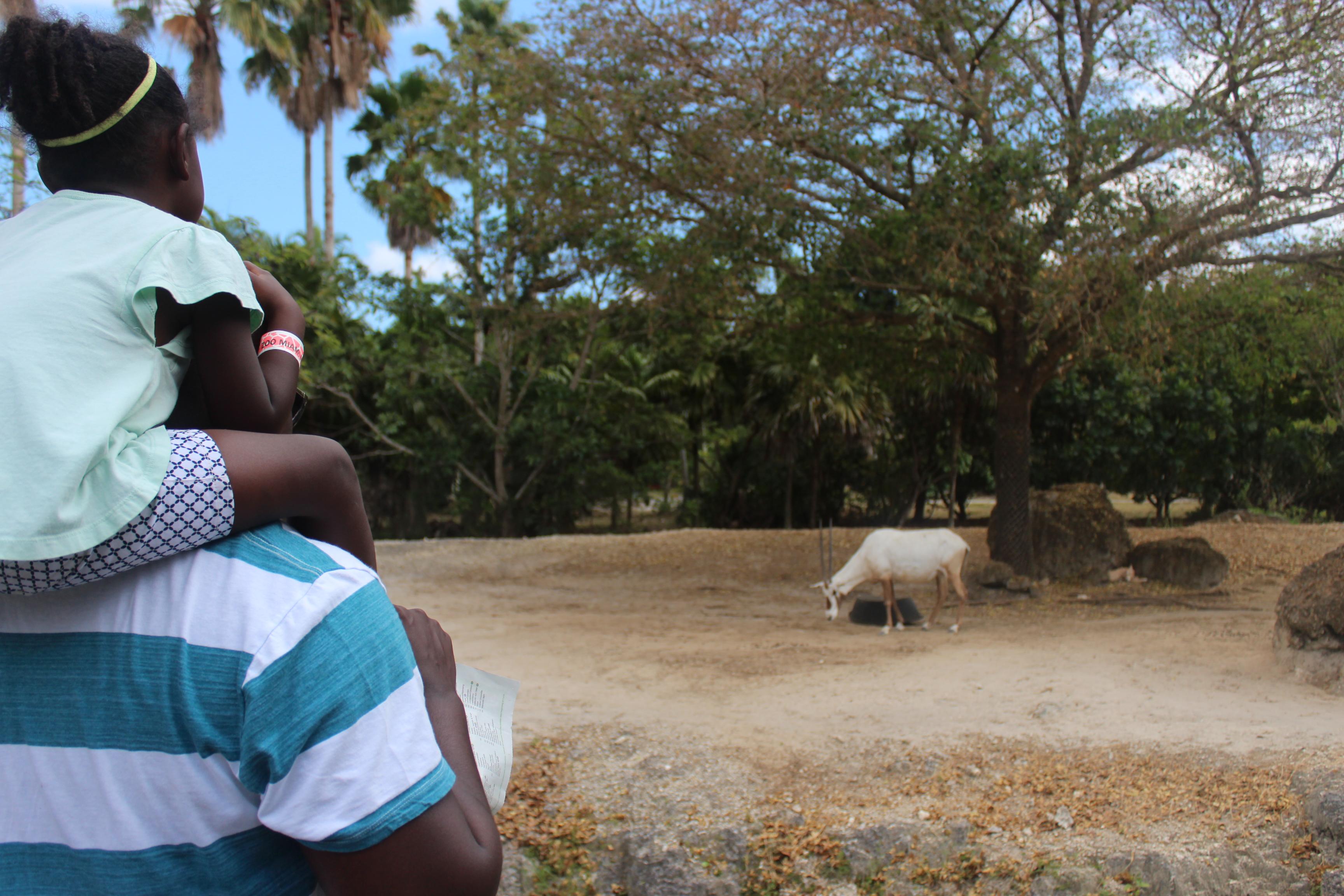 antelope-jas-on-joel