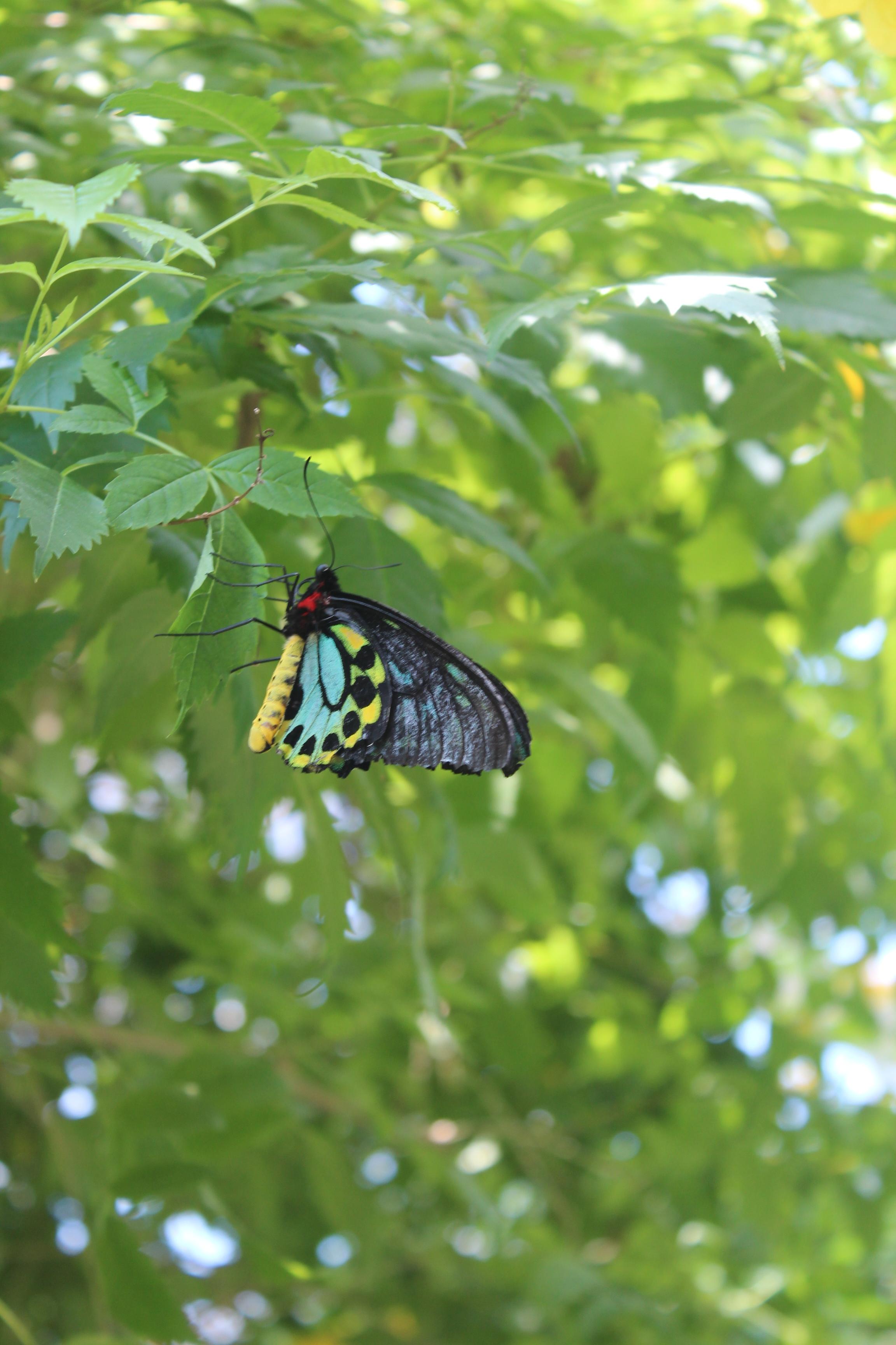 kw-butterfly-closeup-2