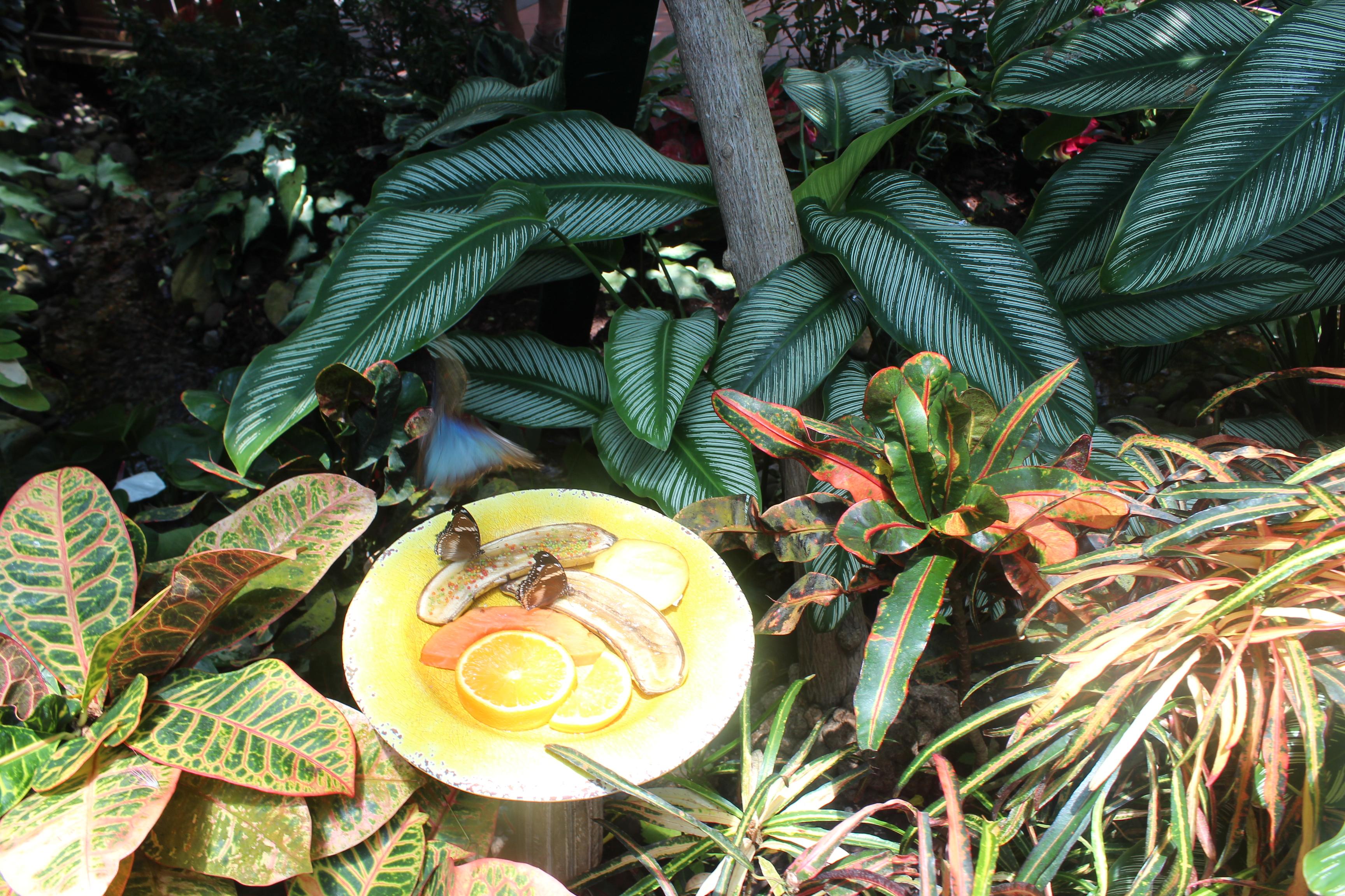 kw-butterfly-feeding-plate-3