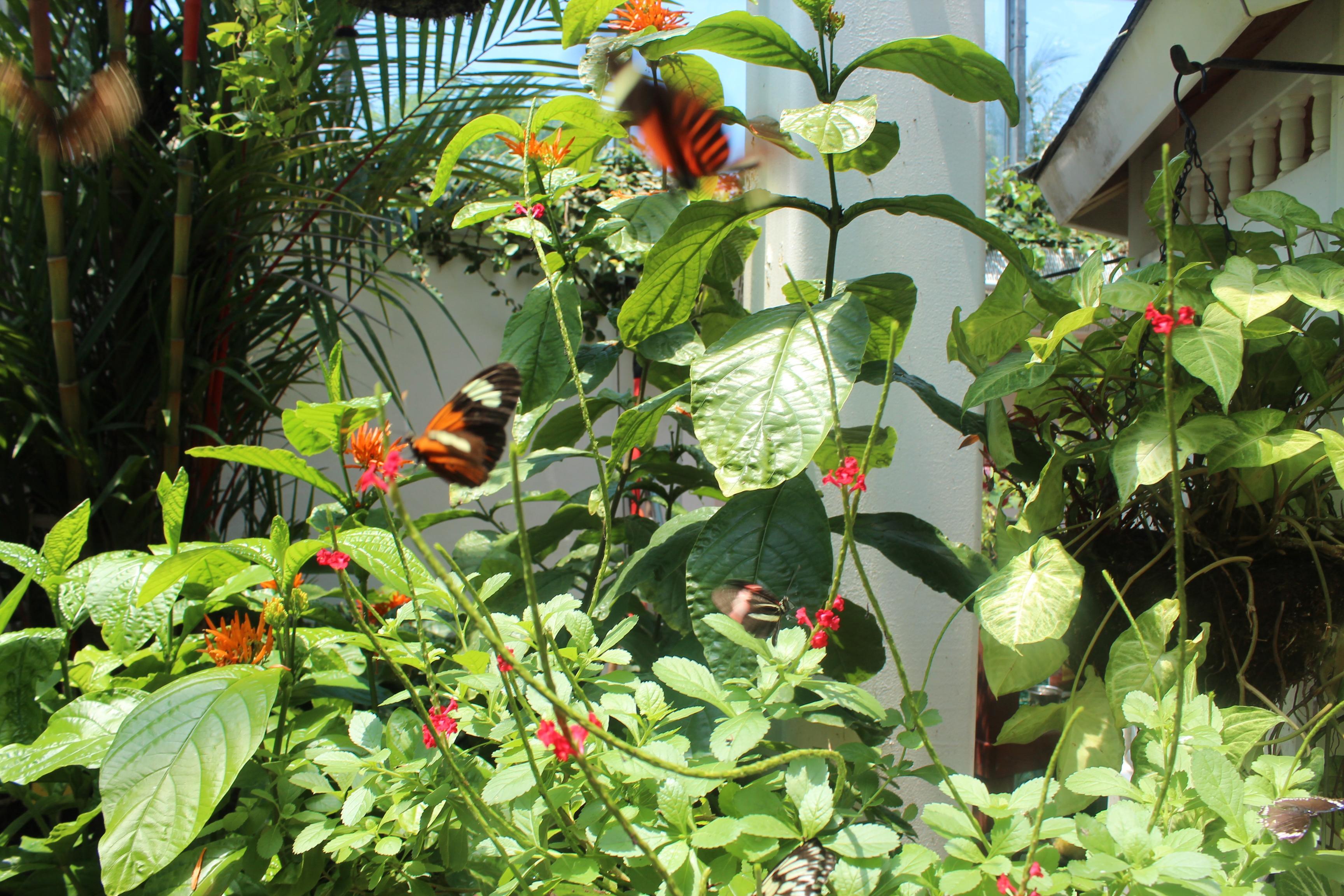 kw-butterfly-foliage-4