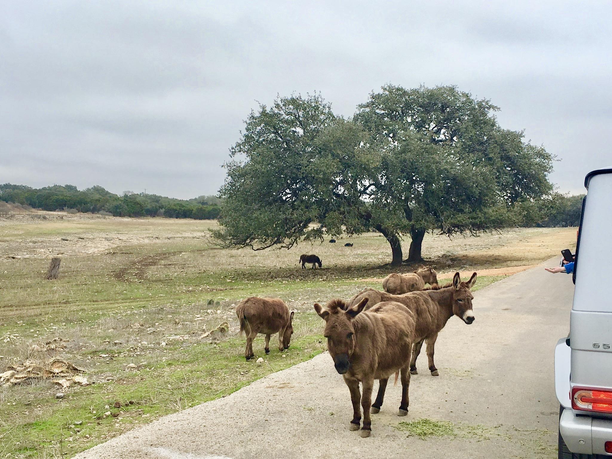 natural bridge wildlife ranch san antonio texas
